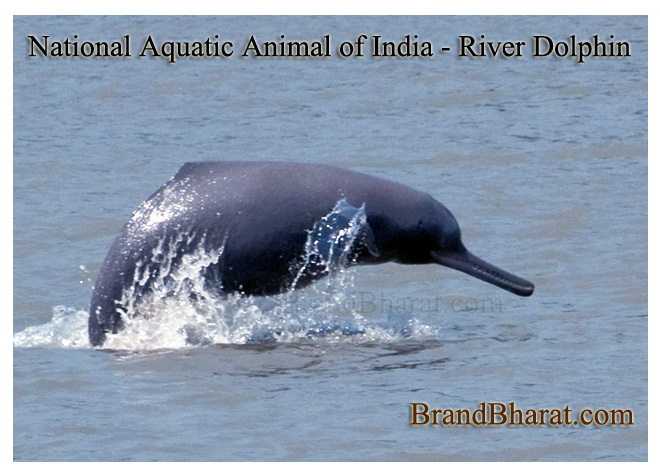 National Aquatic Animal of India - River Dolphin